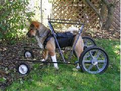 Bernard the Wonderdog in his Suit and Cart
